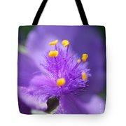 Tradescantia Named Andersonia Mauve Tote Bag