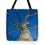 Tree With Branches Tote Bag