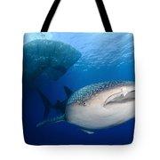 Whale Shark Feeding Under Fishing Tote Bag