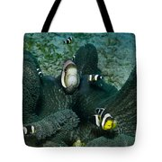 Whole Family Of Clownfish In Dark Grey Tote Bag