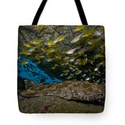 Wobbegong Shark And Cardinalfish, Byron Tote Bag