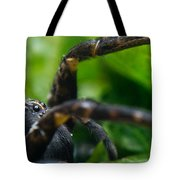Wolf Spider And Babies 2 Tote Bag