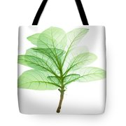 X-ray Of Tobacco Tote Bag