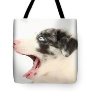 Yawning Border Collie Pup Tote Bag