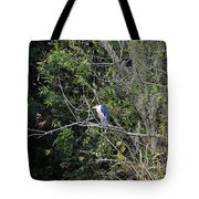 Yellow-crowned Night-heron Tote Bag