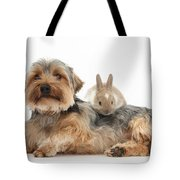 Yorkshire Terrier Dog And Baby Rabbit Tote Bag