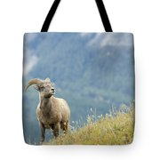 Young Bighorn Sheep, Windy Point Tote Bag