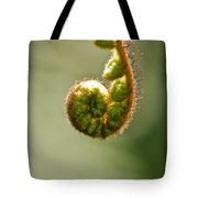 Young Fern In The Morning Sun Tote Bag