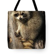 Young Raccoon Tote Bag