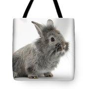 Young Silver Lionhead Rabbit Tote Bag