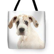 Great Dane Pup Tote Bag