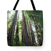 Redwoods Sequoia Sempervirens Tote Bag