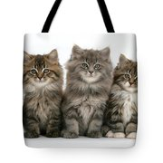 Maine Coon Kittens Tote Bag