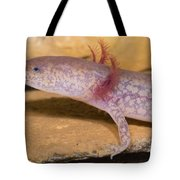 West Virginia Spring Salamander Tote Bag