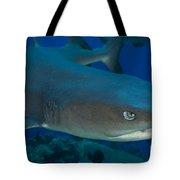 Whitetip Reef Shark, Kimbe Bay, Papua Tote Bag