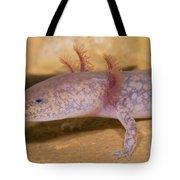 West Virginia Spring Salamander Tote Bag
