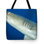 Whitetip Reef Shark, Kimbe Bay, Papua Tote Bag