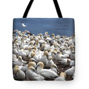 Gannet Colony Tote Bag