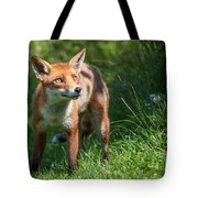 A British Red Fox Tote Bag