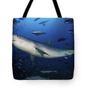 A Large 10 Foot Tiger Shark Swims Tote Bag