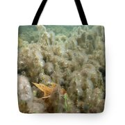 Algae In A Frozen Pond Tote Bag by Ted Kinsman