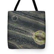 Amaryllis Leaf Epidermis Tote Bag