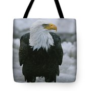 An American Bald Eagle Stands Tote Bag