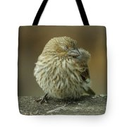 Baby House Finch Tote Bag