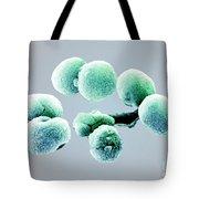 Bacteria, Streptococcus Pneumoniae, Sem Tote Bag
