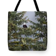 Bald Eagle Haliaeetus Leucocephalus Tote Bag