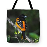 Baltimore Oriole Tote Bag