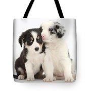 Boreder Collie Puppies Tote Bag