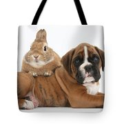 Boxer Puppy And Netherland-cross Rabbit Tote Bag by Mark Taylor