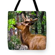 Browsing Elk In The Grand Canyon Tote Bag