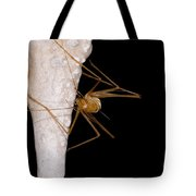 Chinese Cave Cricket Tote Bag