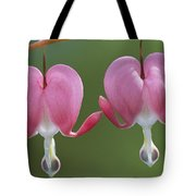 Close View Of Dutchmans Breeches, Or Tote Bag