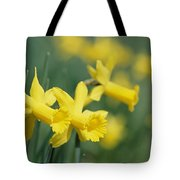 Close View Of Early Spring Daffodils Tote Bag