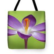 Dutch Crocus Crocus Vernus Flower Tote Bag