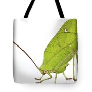 Giant Leaf Katydid Barbilla Np Costa Tote Bag