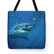 Great White Shark Carcharodon Tote Bag by Mike Parry