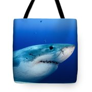 Great White Shark, Guadalupe Island Tote Bag