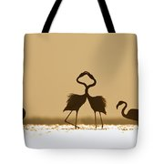 Greater Flamingo Phoenicopterus Ruber Tote Bag