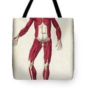 Historical Anatomical Illustration Tote Bag