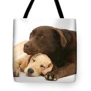 Labradoodle And Labrador Retriever Tote Bag by Jane Burton