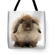 Lionhead-lop Rabbit Tote Bag