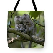 Long-tailed Macaque Macaca Fascicularis Tote Bag by Cyril Ruoso
