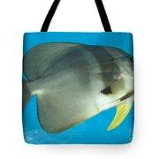 Longfin Spadefish, Papua New Guinea Tote Bag
