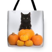 Maine Coon Kitten And Pumpkins Tote Bag