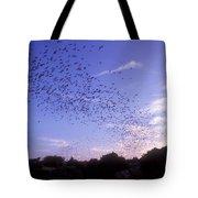 Mexican Freetail Bats Tote Bag
