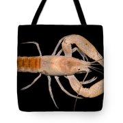 Miami Cave Crayfish Tote Bag